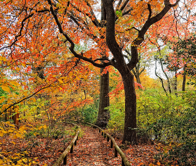Admire The Fall Foliage At Brooklyn Botanic Garden 39 S Free Tuesdays New York
