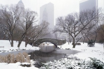 central_park_winter_new_york_city_my_open_letter_to_winter