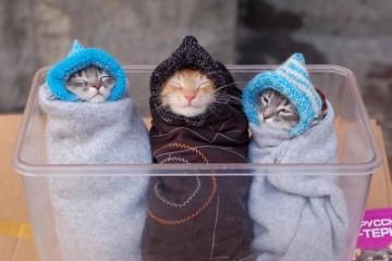 cute-kittens-in-blankets