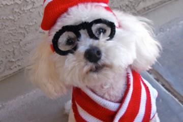 dog-waldo