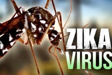 3a70d73d-2f25-44f5-8bed-7771f93ff4ac-large16x9_ZikaVirus