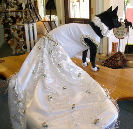 Dog Party Dress Uk