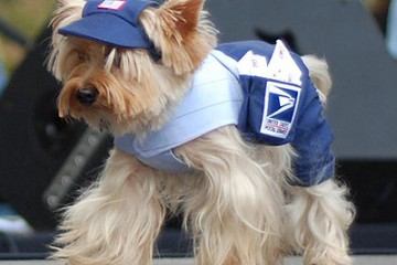 yorkie-mailman