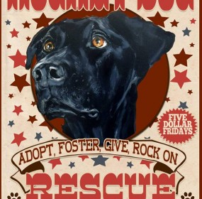 rocket-dog-rescue