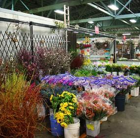 San-Francisco-Flower-Mart