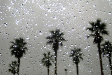 rain-and-palm-trees