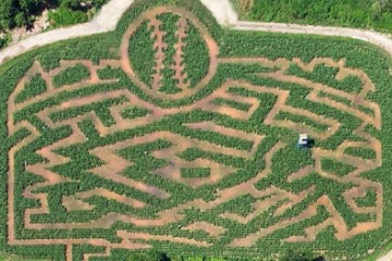 queens-county-farm-the-amazing-maize-maze