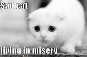 Cat has a Sad