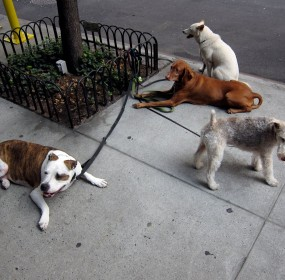 dog-watching-in-nyc