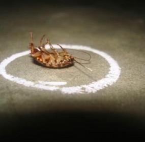 Dead-cockroach-roach-broke-ass-stuart