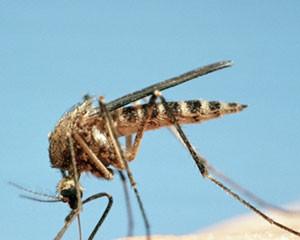 mosquito-broke-ass-stuart