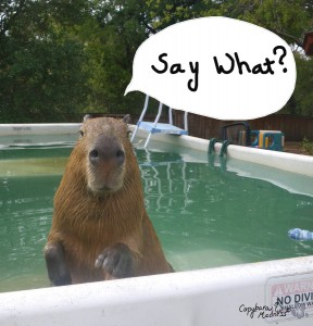 Capybara is concerned for your lack of social media.