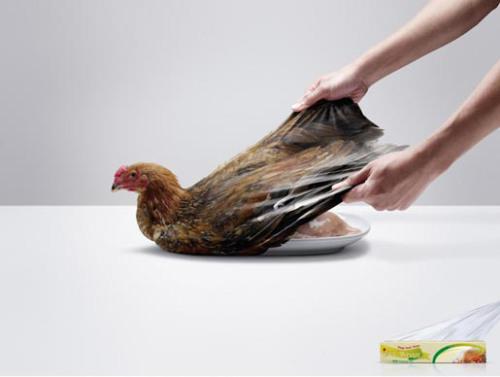 wrap-chicken