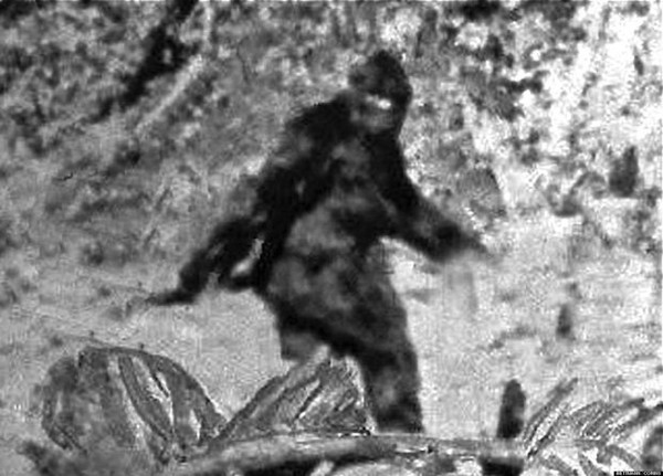 bigfoot sex personals Sure, the fuzzy photos and footprints get most of the attention, but (jokes about  large feet aside) bigfoot sex is a legitimate issue in his book.