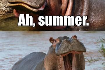 Hippo-Summer-Meme