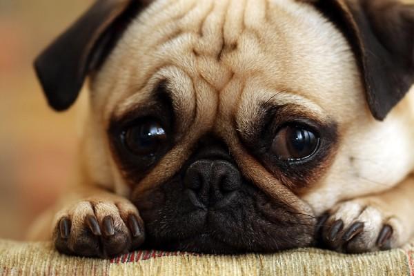 Sad-Dog-Cute-Broke-Ass-Stuart-NYC