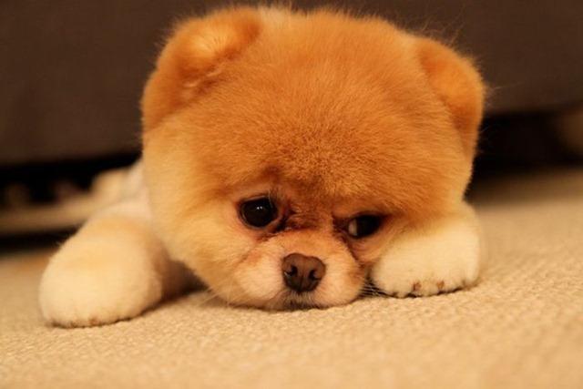 Sad-Dog-Puffy-Broke-Ass-Stuart-NYC