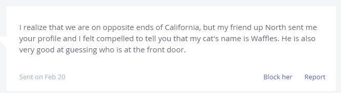 a cat named waffles