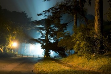 golden gate park at night