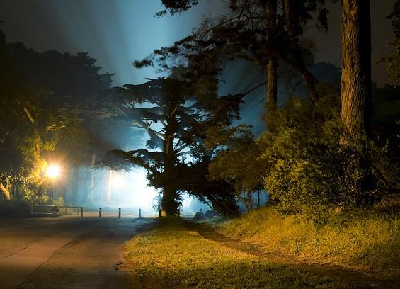 golden gate park at night