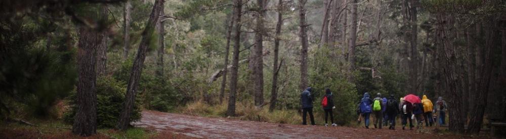 forage-sf-woods
