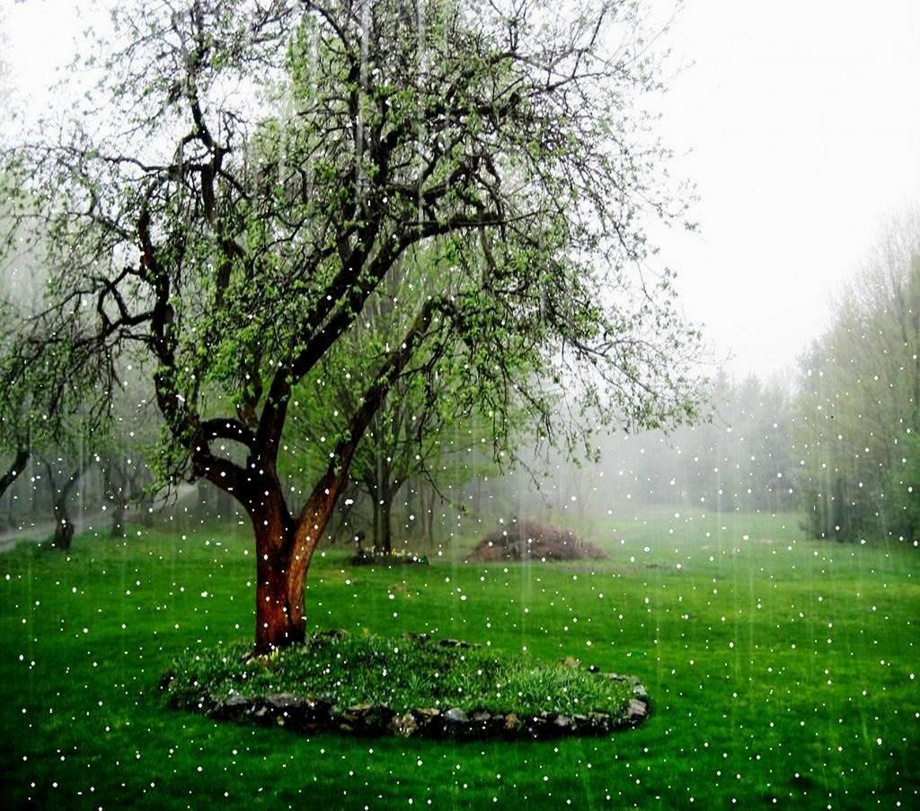 Beautiful-Rain-Falling-Wallpapers