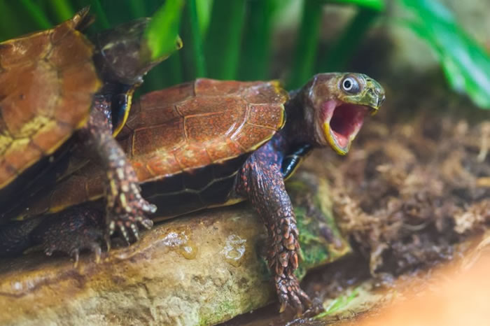 Surprised-Animals-turtle