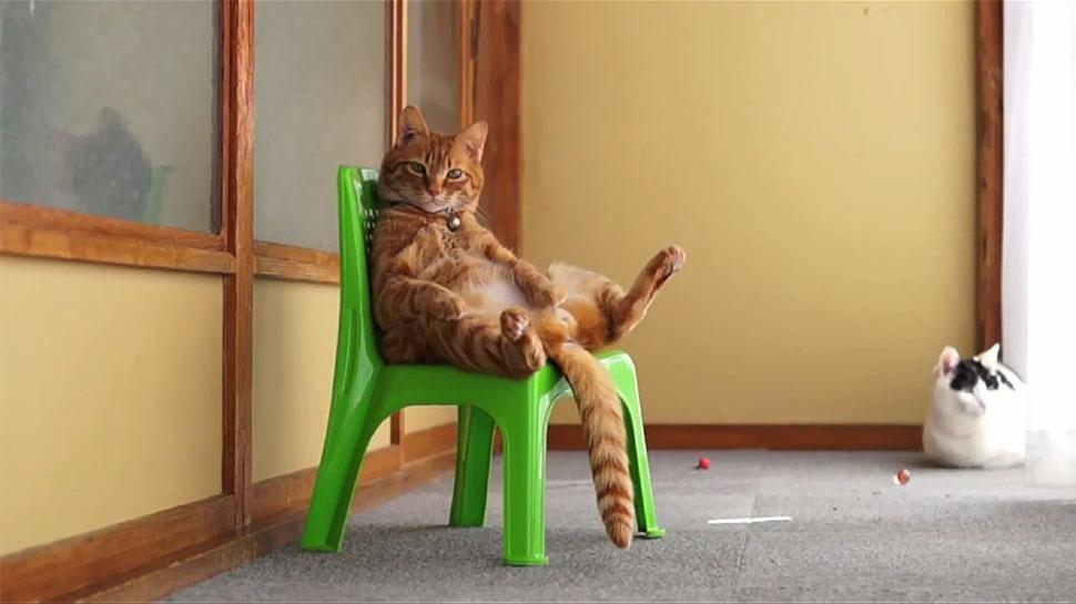 cat-sitting-in-a-chair_970