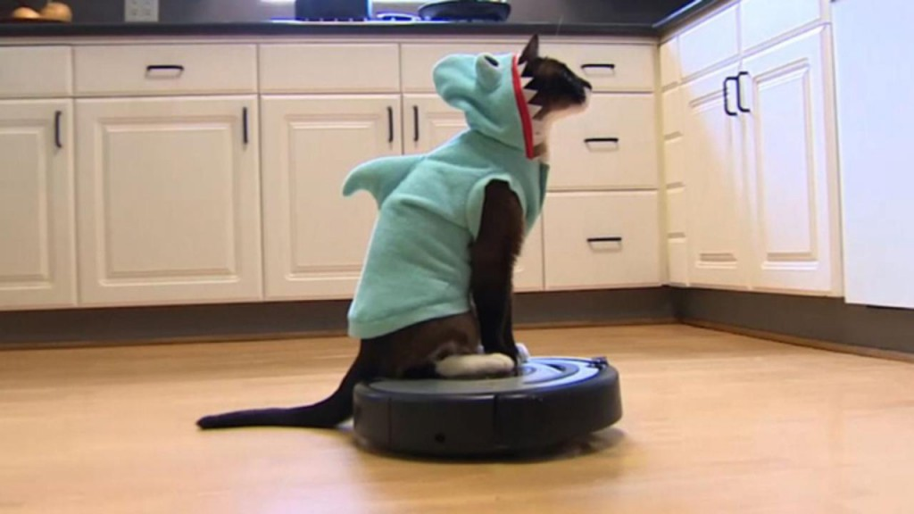 roomba shark cat