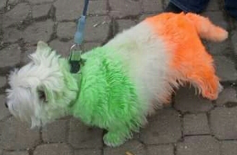 Irish-dog-St. Patrick's Day Parade