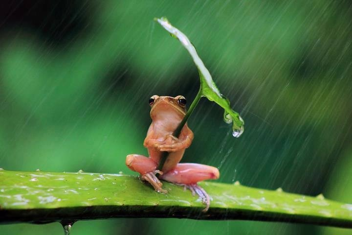 frog-hiding-from-rain