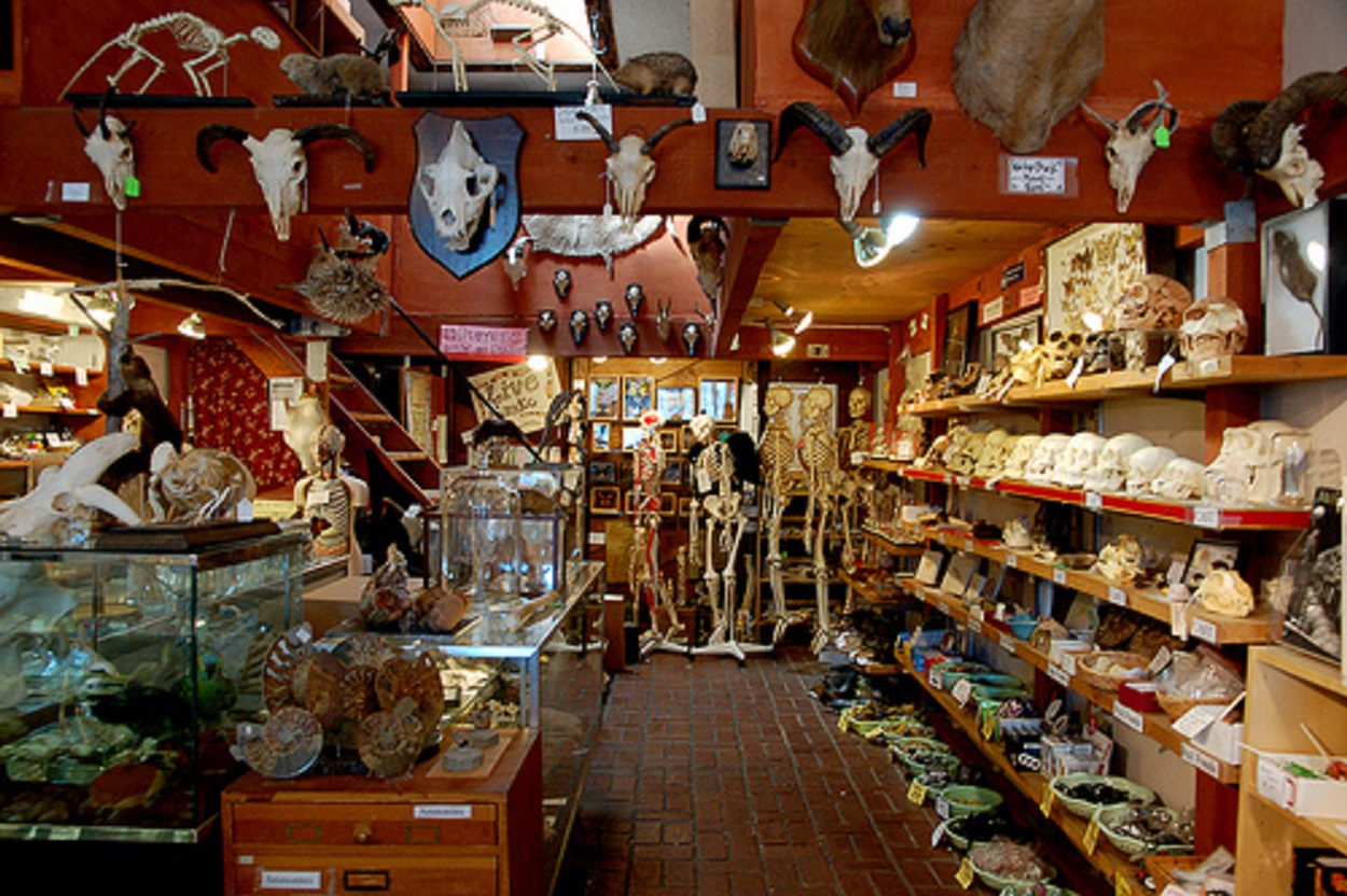 Berkeley Curiosity Shop The Bone Room Is Closing Its