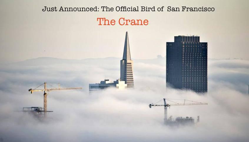 sf cranes