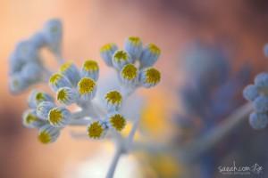 Illumination-saeah-lee-macro-photography