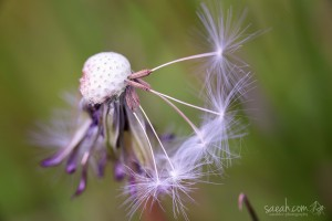 a-touch-of-purple-saeah-lee-macro-phography