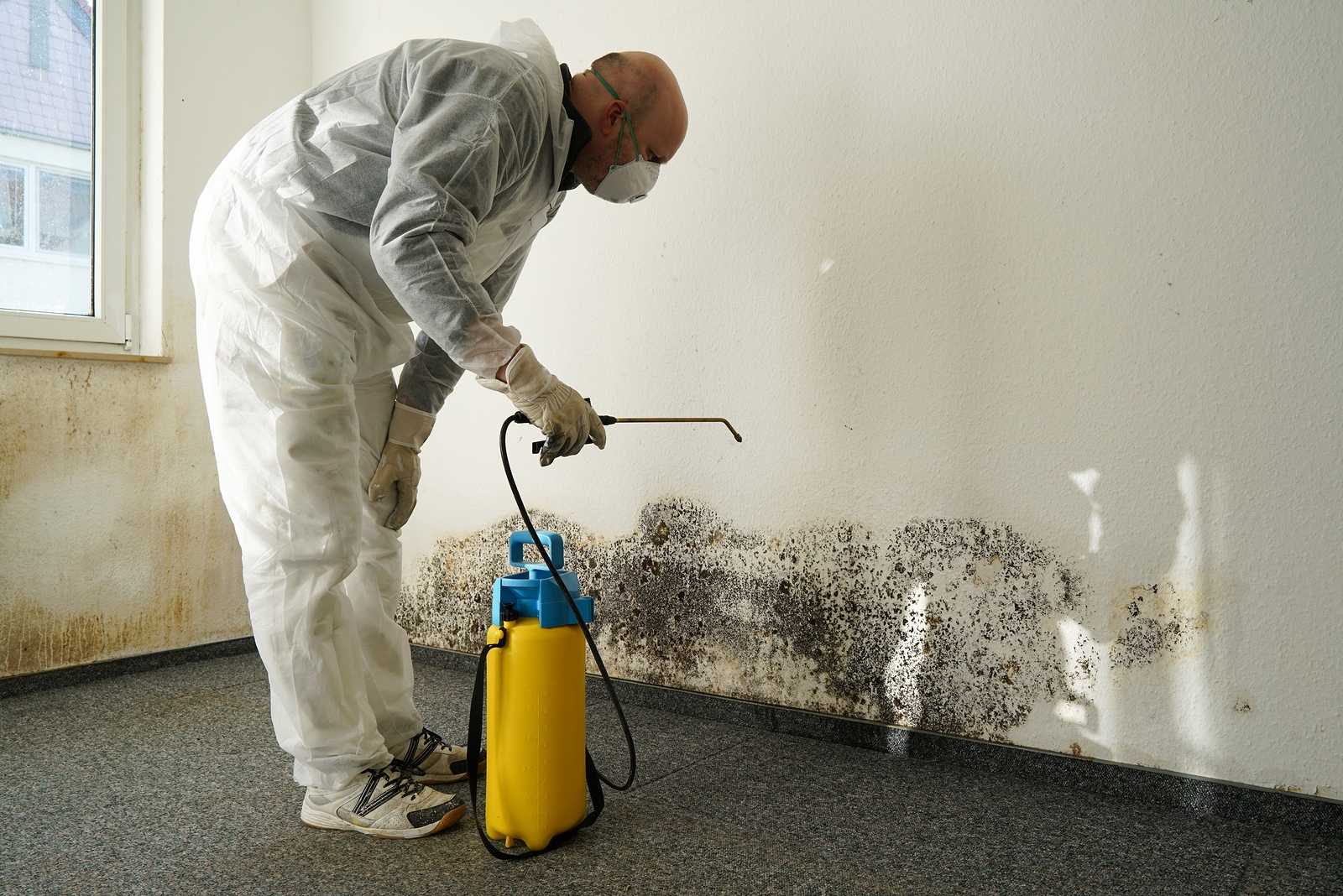 Superieur Specialist In Combating Mold In A Apartment