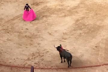 bullfight matador s