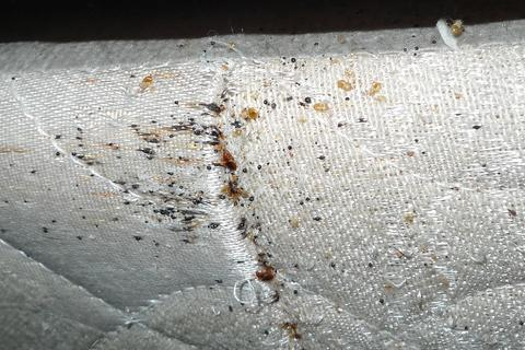 Signs of Bed Bugs on the Mattress