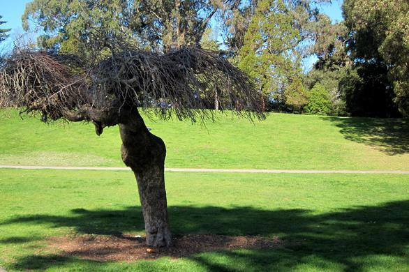 tree janis