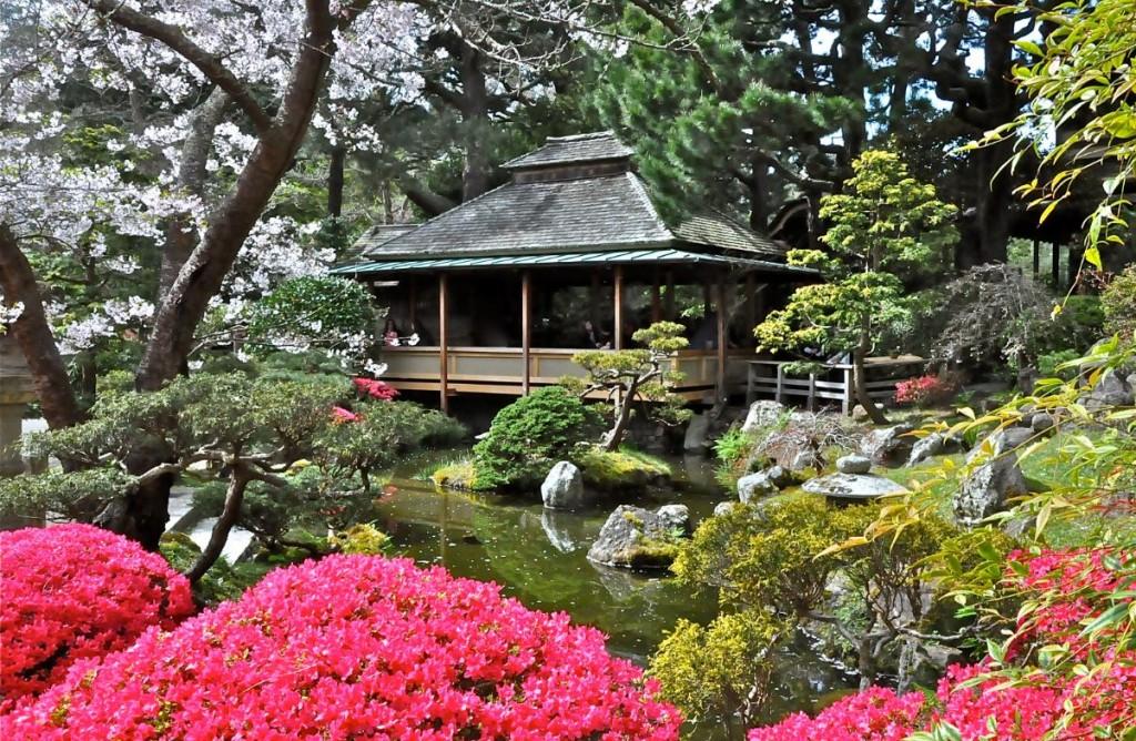 tree tea garden