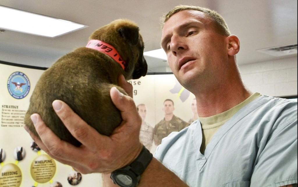 dog doctor