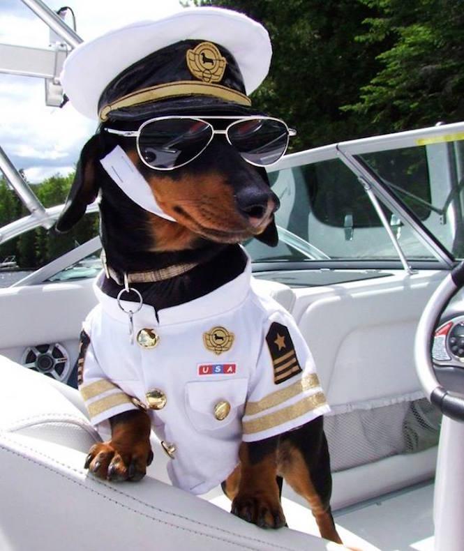 1-dog-costumes