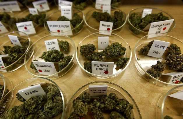 cannabis awareness month