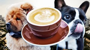 Capuccino Puppies