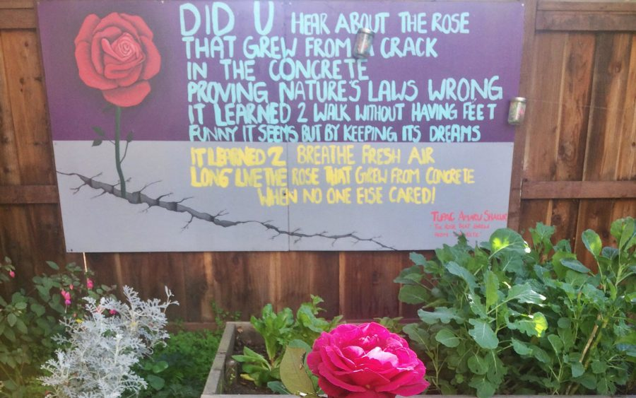 BAS Poetry: A Rose That Grew From Concrete - Broke-Ass ...
